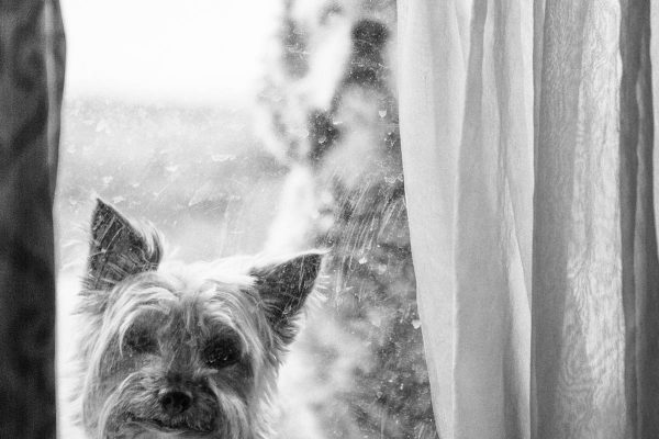 Pet Photography Marbella