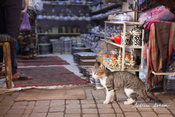 Marrakesh_October 04, 20191 (8)